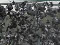 В Донецке намерены запустить лазерный комплекс НЛО-1 для отпугивания птиц
