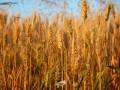 Агроэкспорт Украины в ЕС растет рекордными темпами