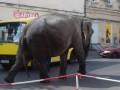 По центру Одессы гулял слон