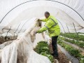 Австрийский фермер посадил украинских работников на принудительный карантин