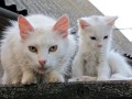 В Крыму кот оставил без электричества несколько сел
