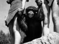 В США скончался шимпанзе, сыгравший в фильмах о Тарзане в 1930-х годах