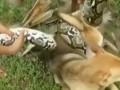 В Китае дети спасли собаку от удава