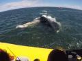 Проплывший под лодкой с туристами кит удивил пользователей сети