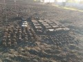 В Харьковской области во дворе частного дома нашли 229 боеприпасов