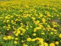 Власти обещают до начала Евро-2012 очистить Украину от пестицидов и гербицидов