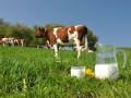 Власти Крыма просят РФ разрешить украинское молоко