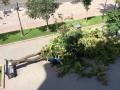 Напротив столичной мэрии на лавочки упал каштан