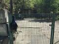 В Киеве убили павлина и повесили его на забор