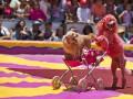 Животные недели: Протест цирковых собак и бэби-бум в Межигорье