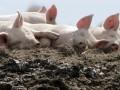 СМИ: Министр обороны предлагает военным заниматься разведением скота