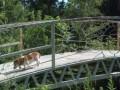 В США украли мост весом в несколько тонн