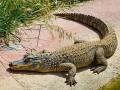 Крокодил съел мужчину, искавшего шпинат