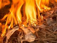 Пожары в Сибири: сгорела деревня, объявлена чрезвычайная ситуация