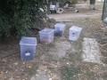 В Харькове девятерых котов бросили умирать в закрытых ящиках