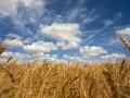 Прогноз погоды на неделю: в Украине до +29, местами дожди