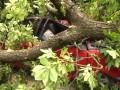 В центре Львова дерево упало на два автомобиля
