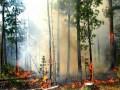 В Украине объявили самый высокий уровень пожарной опасности