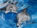 В Минобороны опровергли информацию о побеге дельфинов с военной базы в Севастополе