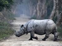 Нападение носорога на авто сняли на видео