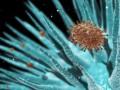 В Канаде зафиксирован первый случай заражения человека птичьим гриппом