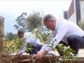 В Эфиопии за день высадили 350 миллионов деревьев