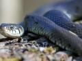 Под Харьковом укушенного змеей мальчика спасали на частном самолете