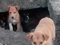 Живодер в собственном подъезде зарезал двух собак в Днепропетровской области