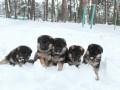 В МВД рассказали, сколько собак служат на границе