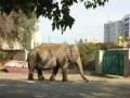 По улицам Харькова гулял слон