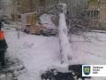 Во Львове непогода повалила около 100 деревьев