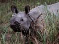 В США посетительницу зоопарка укусил носорог