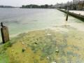 Днепр и Киевское море покрылись плесенью