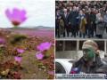 День в фото: цветущая пустыня, День освобождения Украины и зеленый Мирошниченко