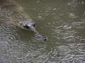На Шри-Ланке крокодил убил корреспондента Financial Times