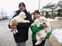 В Италии из разрушенного отеля спасли трех щенков: фото