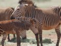 ООН: к 2100 году в Африке вымрет половина видов животных