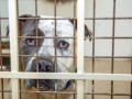 В Германии собака убила семимесячного ребенка