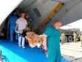 Во Львов авиацией доставили 12 раненых военных