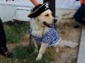 В Одессе 300 собак разных пород боролись за Кубок юга Украины