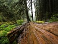 Под Харьковом грибника задавило упавшее дерево