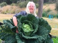 В Австралии вырастили гигантскую капусту