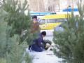 Где дешевле купить елку в Киеве