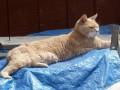 На Аляске пес напал на кота-мэра