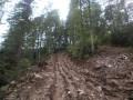 Главного экоинспектора Прикарпатья уволили из-за вырубки лесов