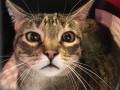 В аэропорту США неделю ловили сбежавшую кошку