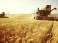 Урожай зерна в Украине составит 60 миллионов тонн - Минагрополитики