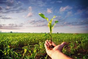 Рынок земли: Кто сможет покупать украинскую землю