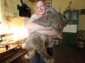 Кролик-гигант весит как трехлетний ребенок (ФОТО)