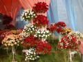В Киеве посадят 15 миллионов цветов, которые специально вырастили в теплице